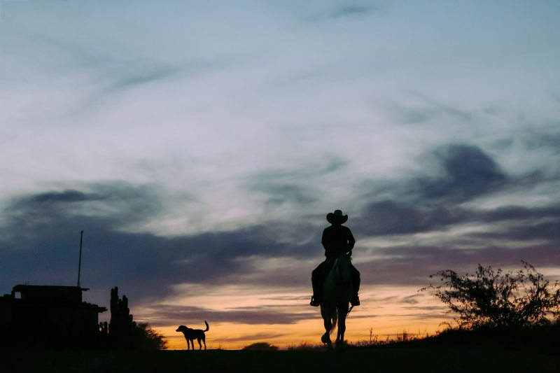 silhouette-of-person-riding-horse-2618372.jpg