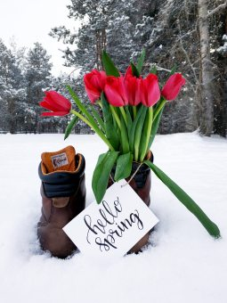 red-flower-bouquet-on-brown-leather-boots-during-snow-908308